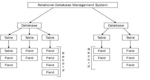 class 10 Computer Database management system reading material